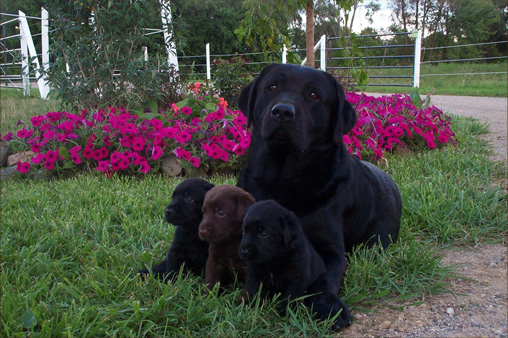 Picture of Magnum with 3 pups